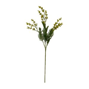 Galho De Acacia EO-0028