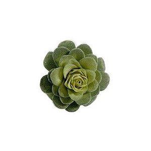 Suculenta Flor