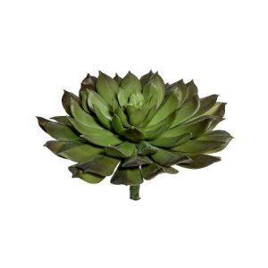 Suculenta Felipe 9165-105