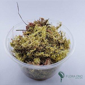 Musgo Sphagnum - 1 Litro