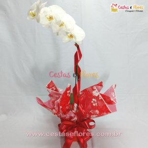 Orquídea PHALAENOPSIS Branca - Uma Haste