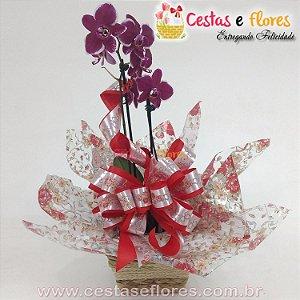 Orquídea PHALAENOPSIS Cores