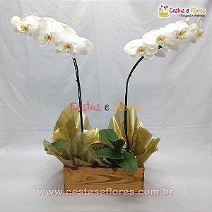 Orquídea PHALAENOPSIS Branca - Duas Hastes