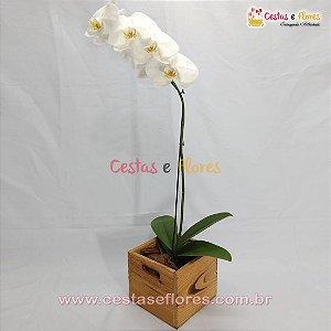 Orquídea PHALAENOPSIS Branca - Uma Haste - Cachepot de Madeira
