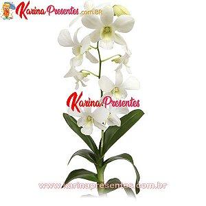 Orquídea Denphalae Branca - Duas Hastes