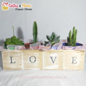 Kit Cactus e Suculentas LOVE