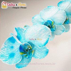 Orquídea PHALAENOPSIS AZUL Vaso Branco