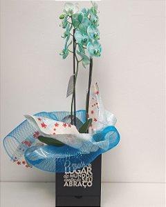 Orquídea Frozen PHALAENOPSIS Caixa Surpresa + Bombons