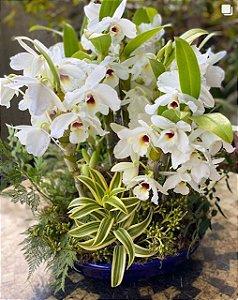 Arranjo com orquídea branca cerâmica azul