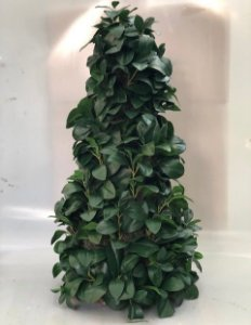 Cone folhagem verde sem vaso