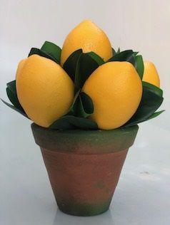 Bool limão siciliano com folhagem verde no vaso