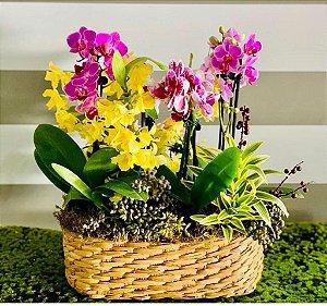 Mini orquídeas no cesto de palha