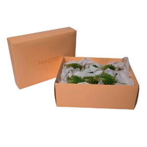 Gift Set Mini Suculenta