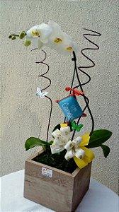 Orquídea Phalaenopsis com carinho