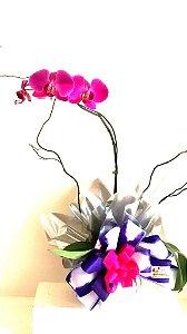 Orquídea Phalaenopsis - 3