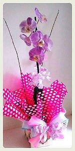 Orquidea Phalaenopsis 10