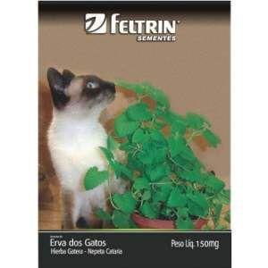 Semente erva dos gatos - Feltrin - 20 unidades