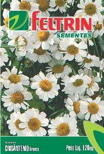 Semente crisantemo - Feltrin - 20 unidades