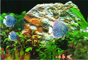 Painel dupla face para aquarios N2 - Still Pet - 40 x 25cm