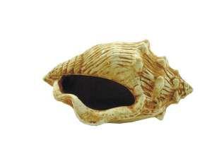 Enfeite caracol envelhecido - Trema - 14x9x9cm