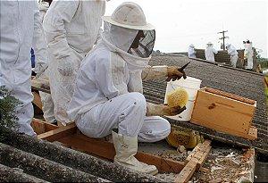 Remoção de enxames de abelhas em situação de risco ou vulnerabilidade