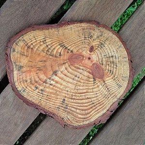 Tábua Pinus Arredondada