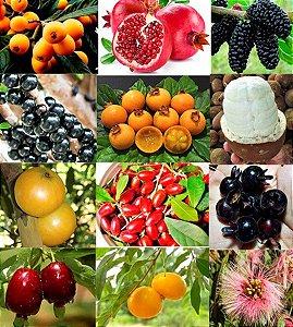 Kit c/ 12 Tipos de Mudas Frutíferas - Nespera-Romã-Amora-Jabuticaba-Guabiroba-Cupuaçu-Cambucá-Grumixama-Inga-Cereja-Milagre-Uvaia