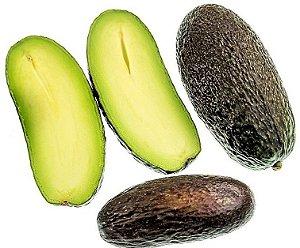 Abacate Avocado SEM SEMENTE - Muda Enxertada - Excelente p/ Vasos