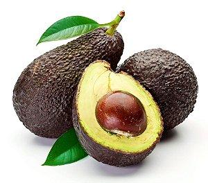 Avocado - Muda formada por semente