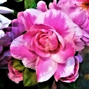 Azaleia Pétalas Mescladas Pink e Branco Flor Dobrada