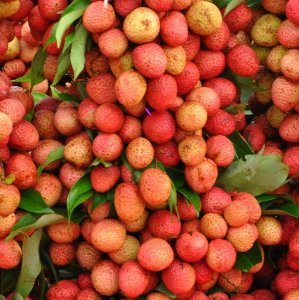 Lichia Kwai Mai Pink - Precoce Mudas Clonadas - Produz em Climas Quentes