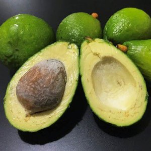 Avocado Anis - Muito Raro