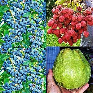 Kit c/ 3 Mudas = Mirtilo Blueberry + Lichia + Goiaba Gigante = Todas Clonadas e p/ Vasos
