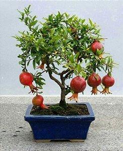 Kit Pomar p/ Vasos Mini Frutas 5 mudas - AMORA,  ACEROLA, ABACAXI, CEREJA E ROMÃ,