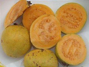 Goiaba polpa Amarela