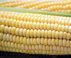 Milho Doce - Kit c 20 sementes