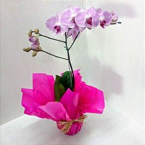 Orquídea Phalen Colorida