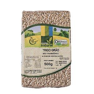 Trigo em grãos Orgânico  - Contém Glúten