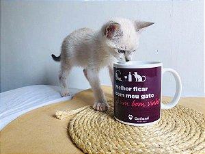 Caneca Gato e Vinho