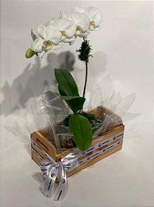 Arranjo Natural com Orquídeas Phalaenópsis Brancas 1 haste