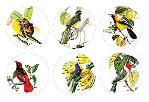 Coleção Pássaros Redondos - (6 unidades)