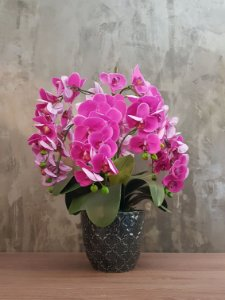 "Orquídea Phalaenopsis ""pink"" 60cm"