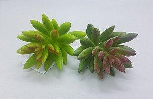 kf000216 mini cactus 5#