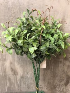 PICK MINI FICUS C/6 24CM LY0091F