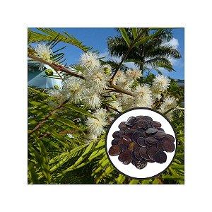 Yopo / Angico-do-morro (Anadenanthera peregrina) 5 grs aproximadamente 45 sementes