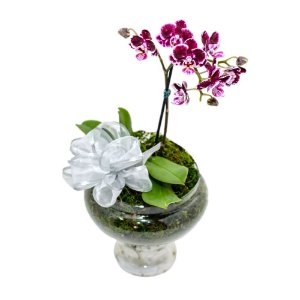 Delicadeza em vaso