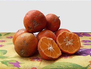 Limão Galego 1kg