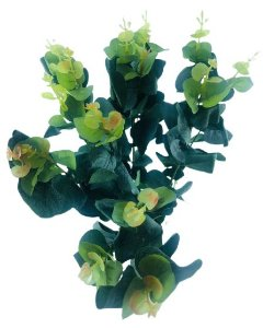 Folhagem Eucalipto Verde X72 50CM