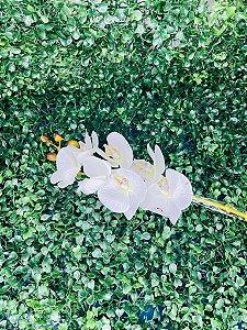Haste Orquídea Branca