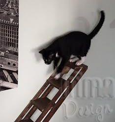 Escada Com Corrimão